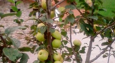 comprar vinagre de manzana ecológico valleoscuru