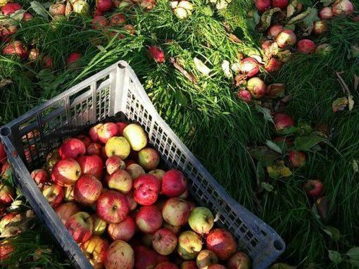 sidra valleoscuru tienda manzanas