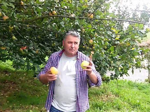 sidra valleoscuru tienda manzanos alberto
