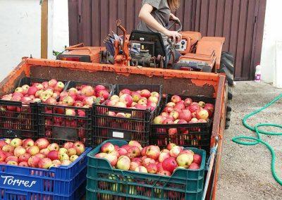 planes recogida manzana